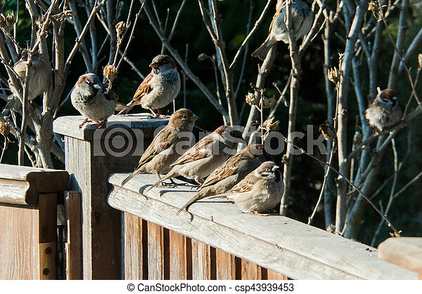 sparrows sit on the fence - csp43939453