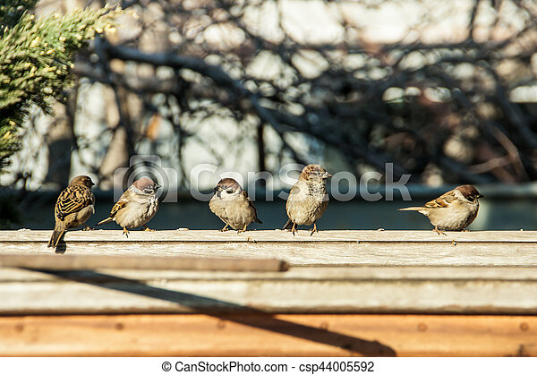sparrows sit on the fence - csp44005592