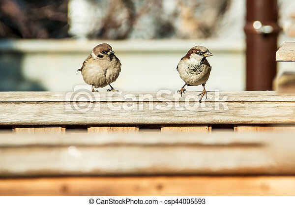 sparrows sit on the fence - csp44005593