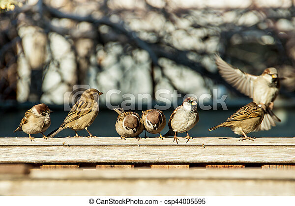 sparrows sit on the fence - csp44005595