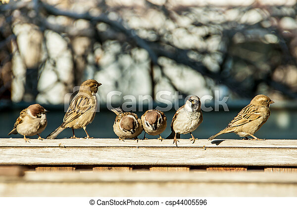 sparrows sit on the fence - csp44005596