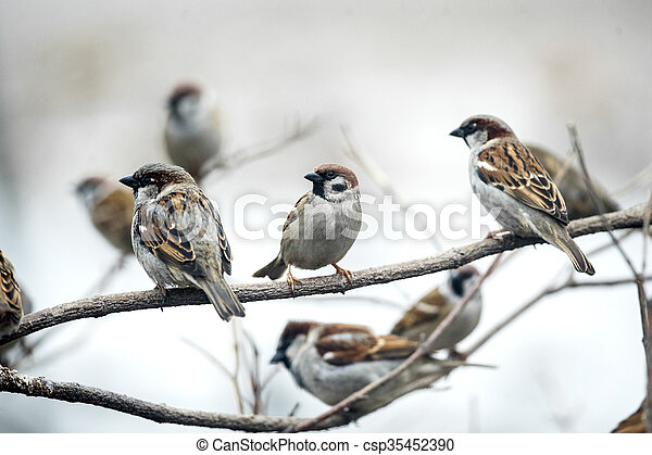 sparrows sitting on branches - csp35452390