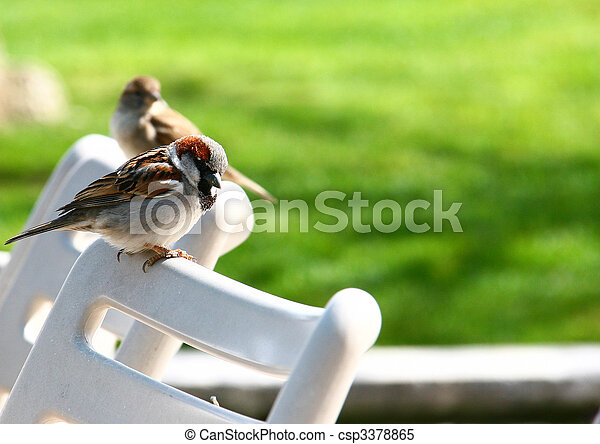 Sparrows - csp3378865