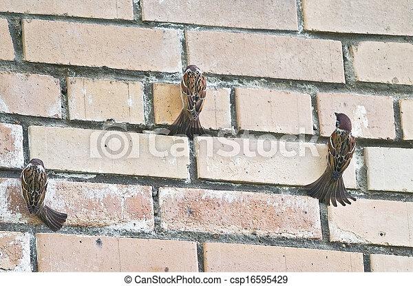 sparrows - csp16595429