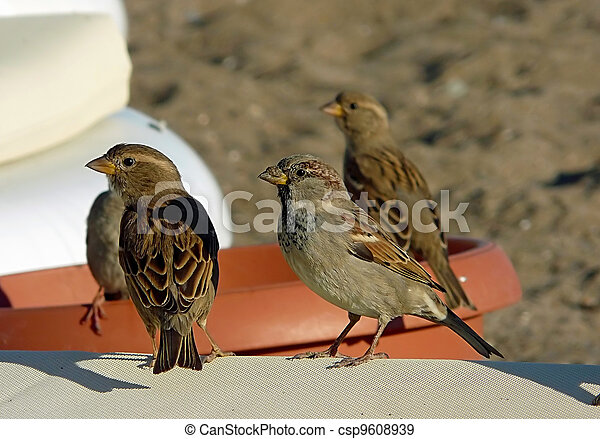 Sparrows - csp9608939
