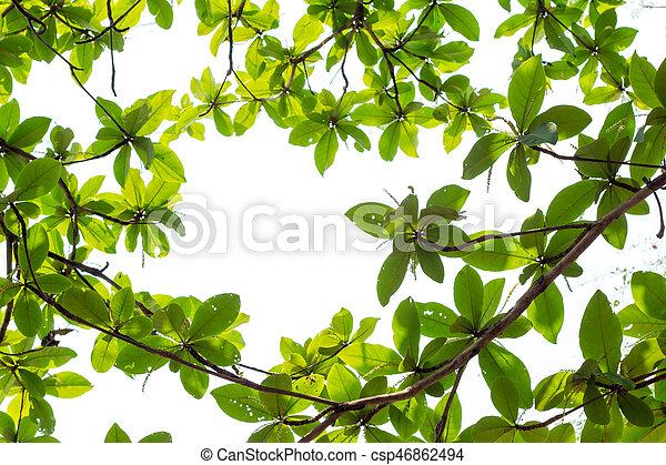 Spazio Foglie Giovane Sfondo Verde Bianco Copia Bordo Foglie