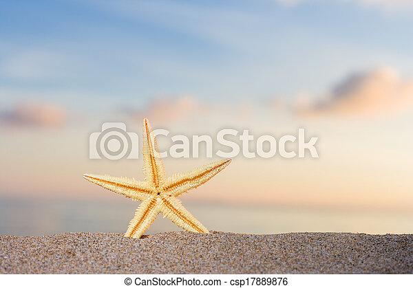 spiaggia, alba, starfish - csp17889876