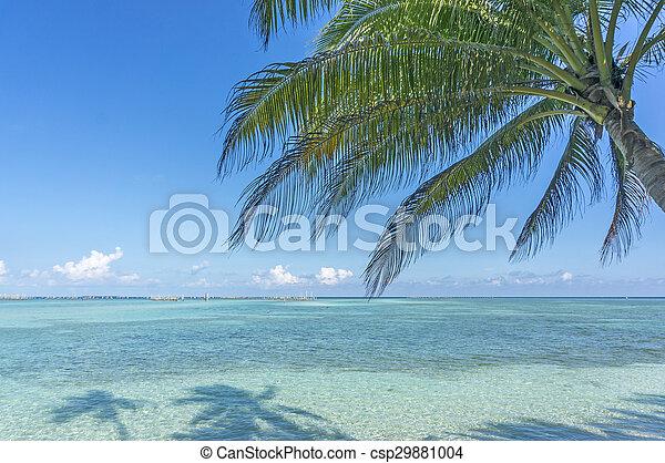 spiaggia - csp29881004