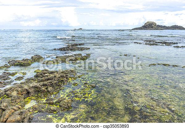 spiaggia, muschio - csp35053893