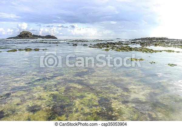 spiaggia, muschio - csp35053904