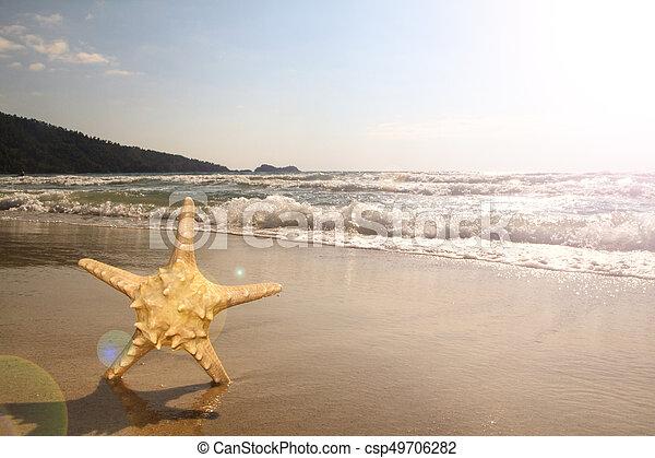 spiaggia, starfish - csp49706282