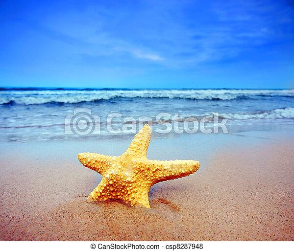 spiaggia, starfish - csp8287948