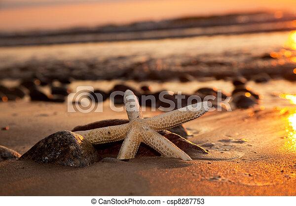 spiaggia, tramonto, starfish - csp8287753