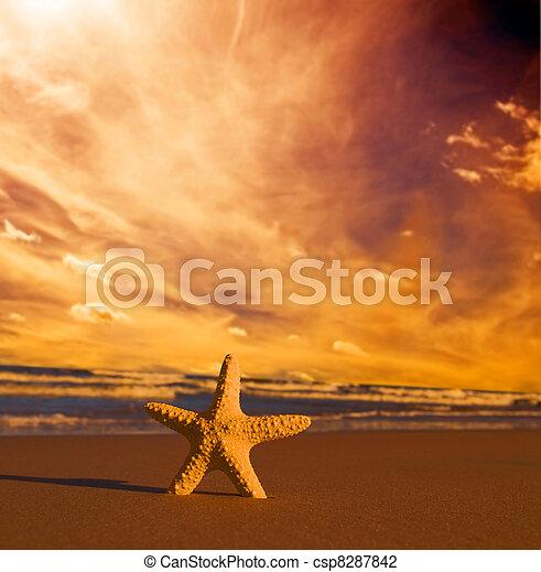 spiaggia, tramonto, starfish - csp8287842