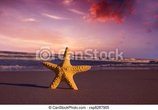 spiaggia, tramonto, starfish - csp8287905