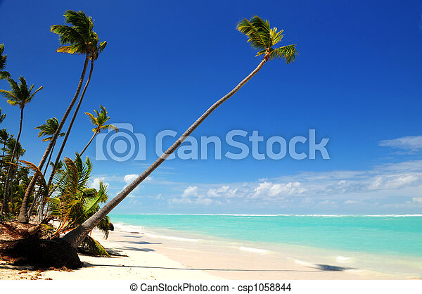 spiaggia tropicale - csp1058844