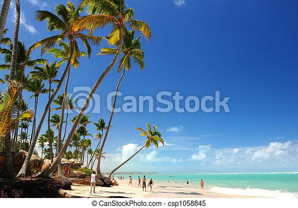 spiaggia tropicale - csp1058845
