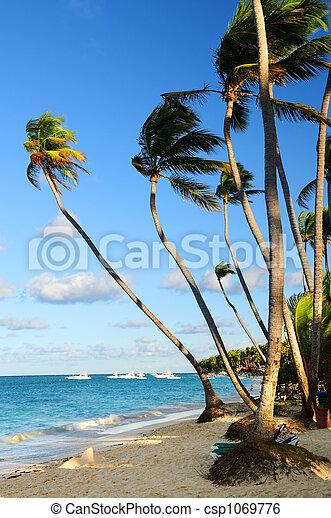 spiaggia tropicale - csp1069776