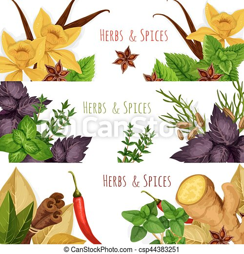 Spices And Herbs Vector Banners Set Seasonings Spicy Herbs Or Herbal Spices Condiments Rosemary And Thyme Sage Bay Leaf