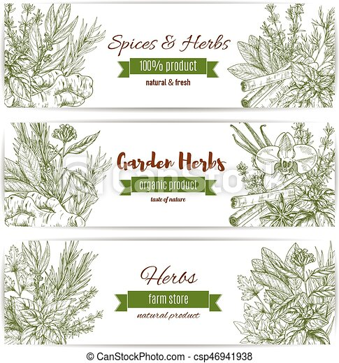 Spices And Herbs Vector Sketch Banners Herbs And Spices Sketch Vector Banners Set Of Parsley And Cinnamon Lavender And