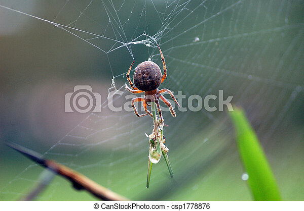 Spider catching insect - csp1778876