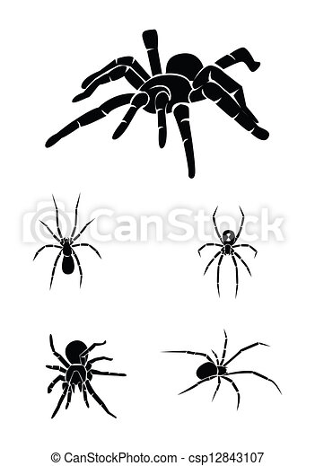 spider Collection Set - csp12843107