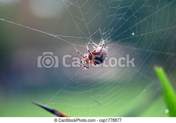 Spider in the net - csp1778877