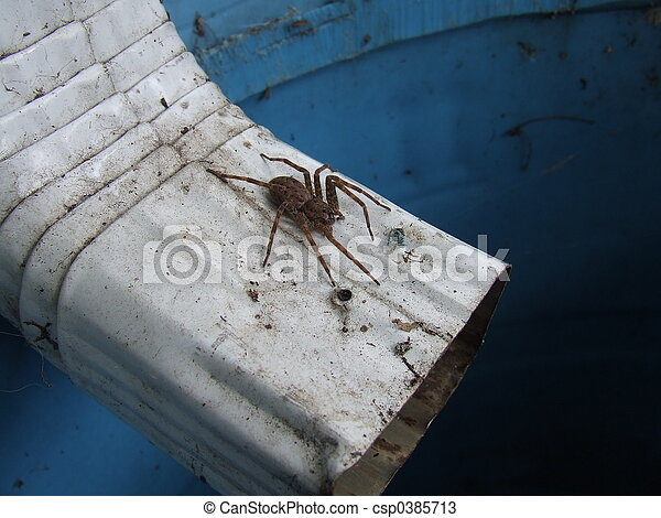 spider on downspout - csp0385713