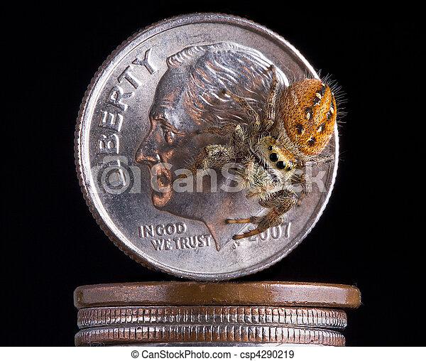 Spider on money - csp4290219