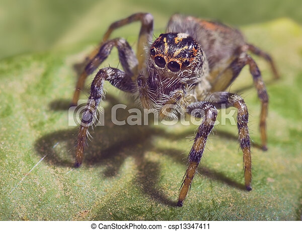 Spider - csp13347411