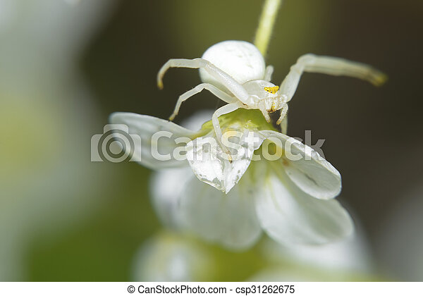 Spider sitting on a small white flower macro photo mightylinksfo