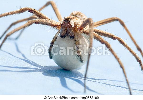 Spider - csp0683100