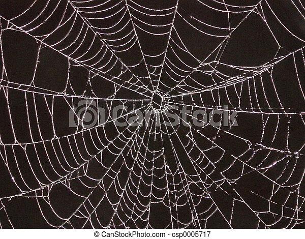 Spider Web - csp0005717
