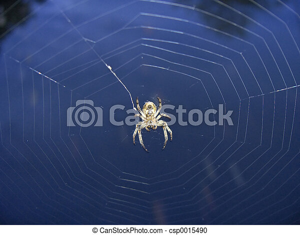 Spider & Web - csp0015490