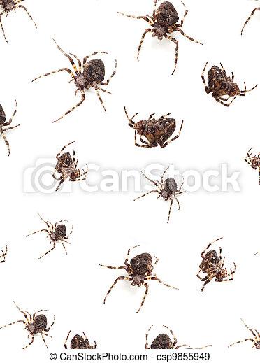 Spiders - csp9855949
