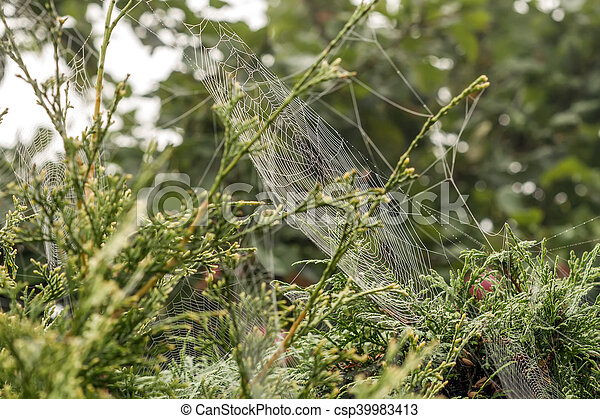 Spiders Webs To Swing On The Trees
