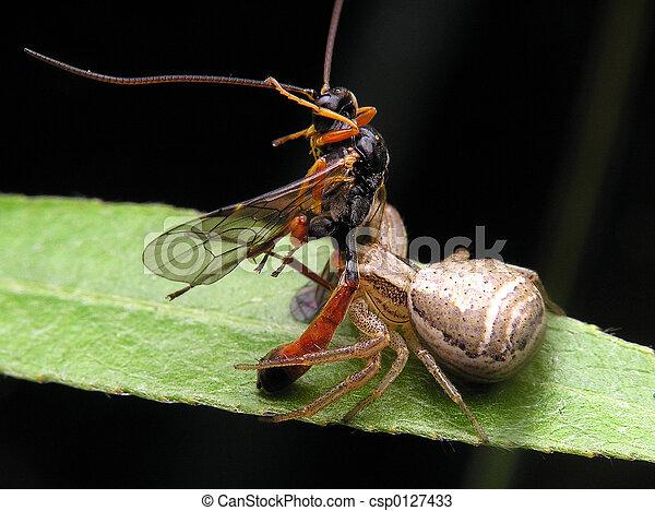 spider&victim - csp0127433