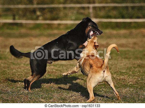 spielen, hund - csp1631133