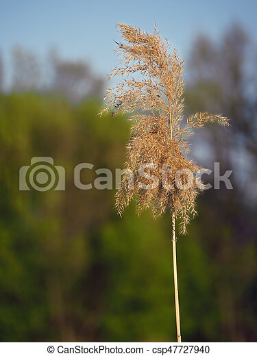 Spikelet at the blue lake - csp47727940