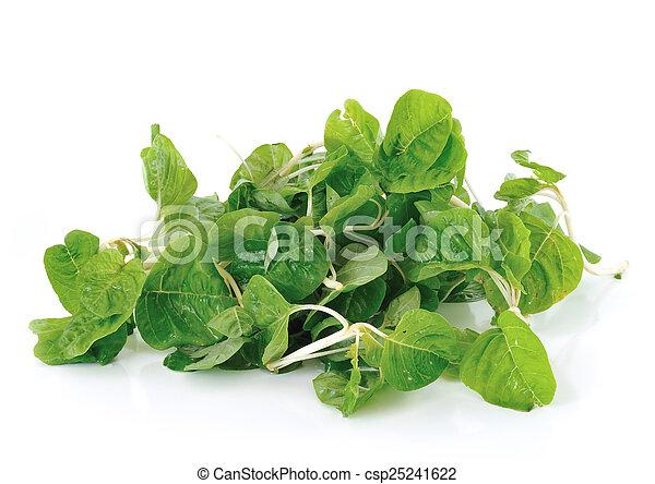 Spinach on white background - csp25241622