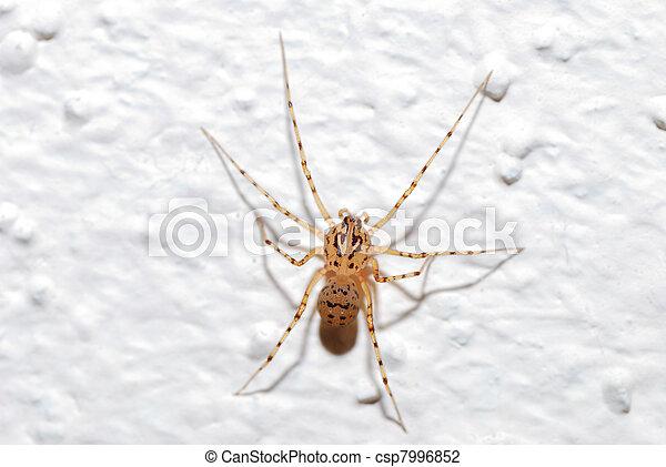 An käfer der wand kleine braune Kleine braune