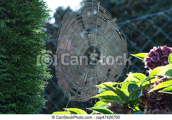 Spinnennetz mit Morgentau mit Gegenlicht - csp47426700