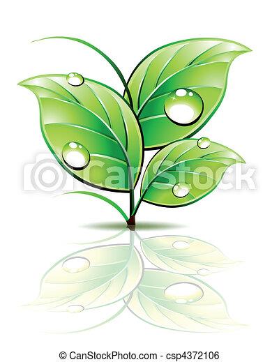 spira, leaves., dagg, vektor, grön, filial - csp4372106