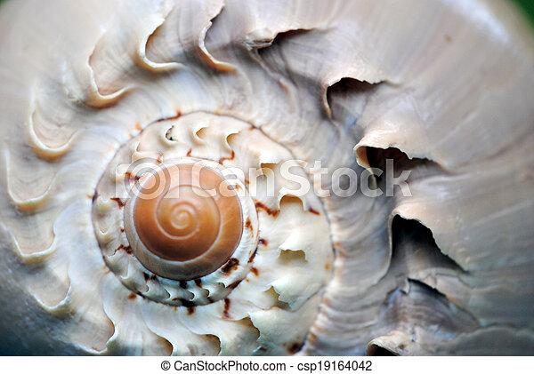 Spiral seashell - csp19164042