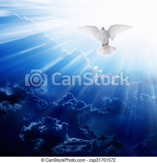 spirito, santo, uccello - csp31701572