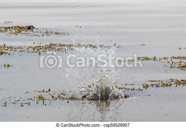 Splashes - csp59529907