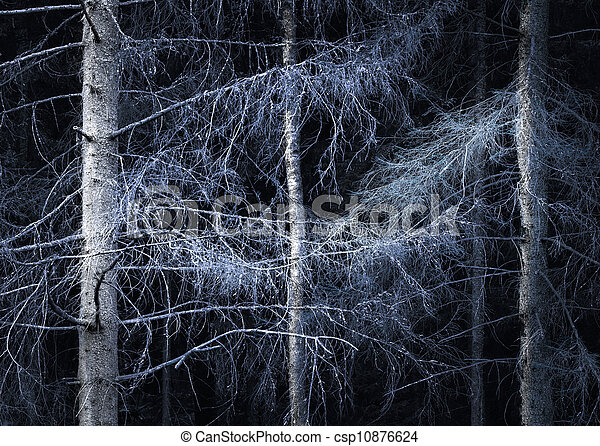 Spooky forest - csp10876624