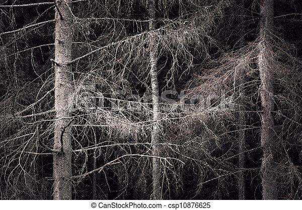 Spooky forest - csp10876625