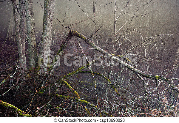 Spooky forest - csp13698028