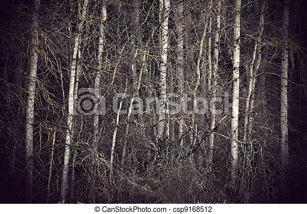 Spooky forest - csp9168512